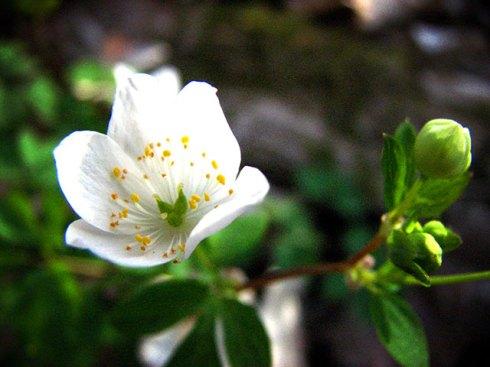 flower-3-web
