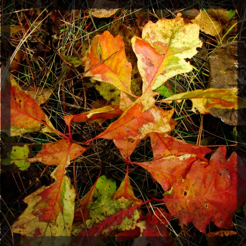 leavesitasca